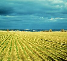 Drive By Fields Of Gold by trueblvr