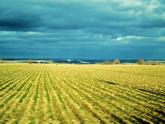 Drive By Fields Of Gold by trueblvr