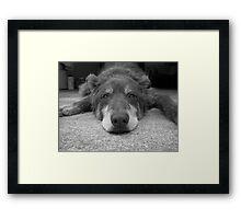 Bored Puppy Framed Print