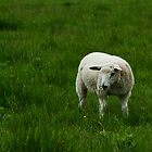 lamb in grass by Skye Hohmann