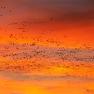 Morning Migration by Randall Ingalls