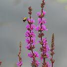 Bee Landing On Wetland Flower by Sandra Cockayne