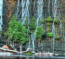 Dam Waterfall with Plants by jvrichardson