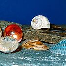 Shell Collection by AlGrover