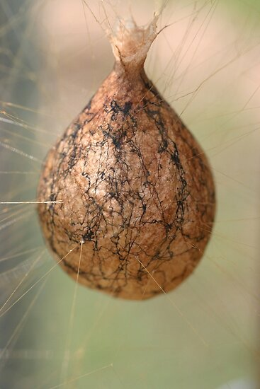 Id this for Garden spider egg sac