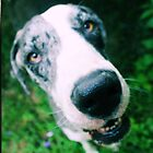 dog days by bdorlac