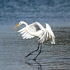Egret dancing on the Lake by Doug Cliff