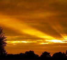 Golden Rays by newfan