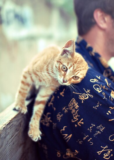 cat purrs and rubs shoulders by Iuliia Dumnova
