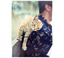 cat purrs and rubs shoulders Poster