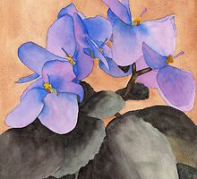 African Violet by Ken Powers