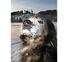 chico the snow monster Photographic Print