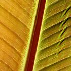 bronze leaf by yvesrossetti
