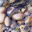 Pebbles by Ann Mortimer