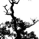 Black and White Silhouette by AlGrover