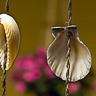 Hanging Sea Shells by Gene Hilton