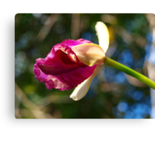 The first Orchid bud of Spring Canvas Print