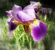 Raindrops on Purple Irises #1 by Dawna Morton