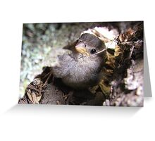 Can you see me! - Baby Sparrow - New Zealand Greeting Card