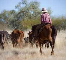 Stockman with cattle at Camooweal 2 by Carmel Williams