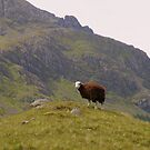 The Lake District: The Lonely Sheep by Rob Parsons