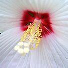 White Lace © by Dawn M. Becker