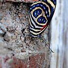Spangled - Bolivia by Jason Weigner
