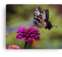 Yellow Tiger Swallowtail Butterfly Canvas Print