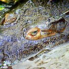 American Crocodile (Crocodylus actus) - Costa Rica by Jason Weigner