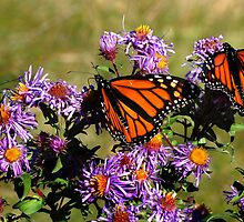 Butterfly Mania by Diane E. Berry