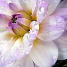 2013  Flowers In Macro Calendar 2013 by naturelover