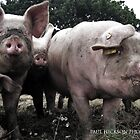 Reservoir Pigs by Paul Hickson