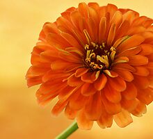 Outrageous Orange by Sandy Keeton