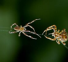 MR AND MRS SPIDER by RoseMarie747