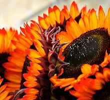 Farmers Market Fiery Sunflowers by bluemoondc