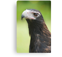 Hawk eye - wedge tail eagle Canvas Print