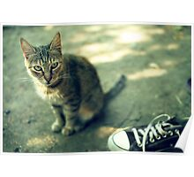 Cat and shoe Poster