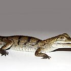 Baby Freshwater Croc by tracyleephoto