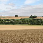 Wheat Field near Kennet Long Barrow, Wiltshire. by kissuquick