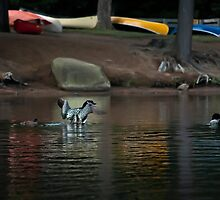 Loons and Colourful Canoes by Laura Sanders