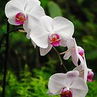 Orchids by Rob Hawkins