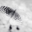 Infrared Butterfly by Colleen Drew