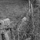 Fence  by sceneclickseen