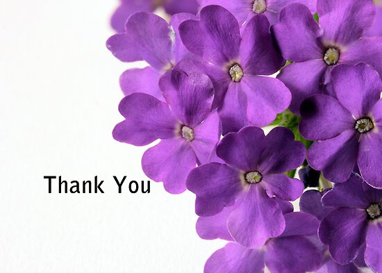 Sheryl Kasper › Portfolio › Purple Flower Thank You