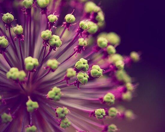 Purple and Lime Green by ameliakayphotog