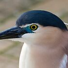 Nankeen Night Heron by PPV247