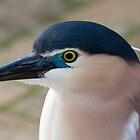 Nankeen Night Heron by PPV247