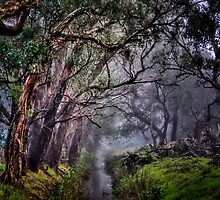 Foggy Morning Creek by boofuls