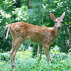 Posing Fawn by patti4glory