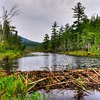 Adirondack Beaver Dam by Monte Morton